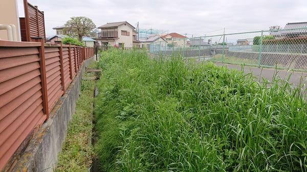 伸びた草の様子