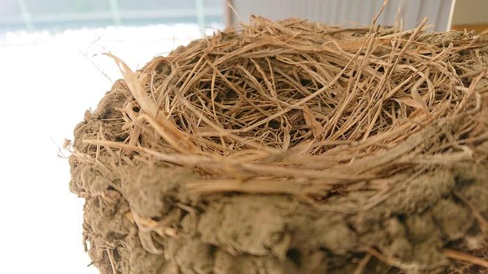 つばめの巣2